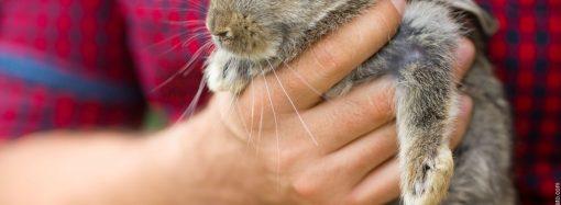 Tierkommunikation für Kinder – Das Ebook von Tina von der Brüggen